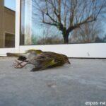 Oiseau victime